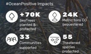Imagen con datos sobre las acciones que han produce Sea Trees contra la contaminación del hombre