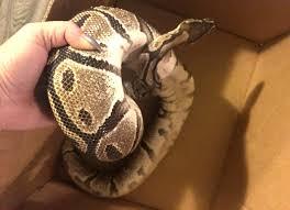 serpiente en la mano de una persona