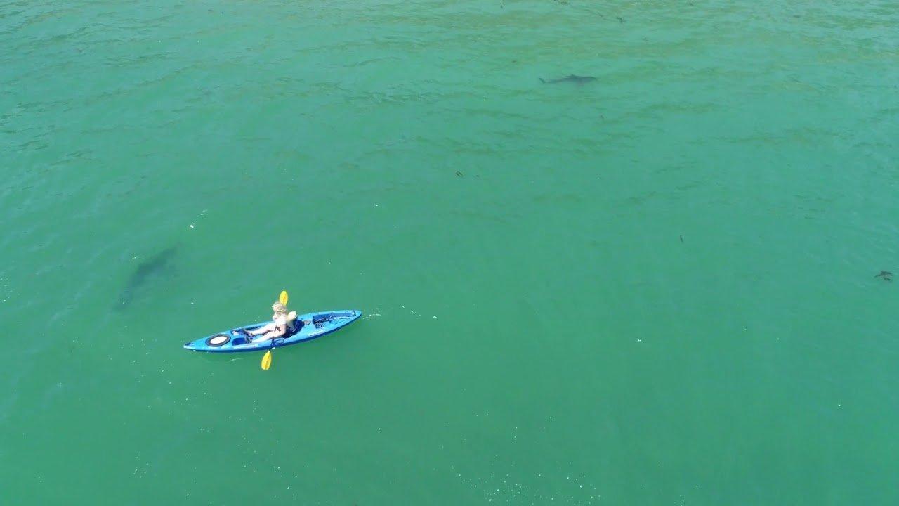 kayak con tiburones